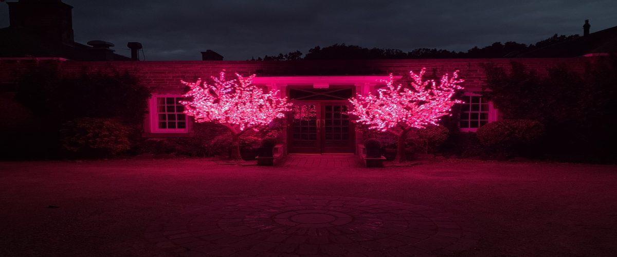 Indoor & Outdoor LED Tree Hire