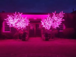 LED Tree Hire Darlington